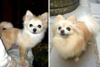 Before and After Puppy Uglies
