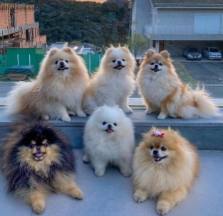 Big Pom Family (@bigpomfamily)