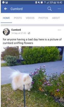 Cumlord facebook