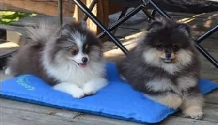 Give your Pom a cooling mat