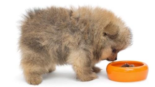 Homemade Food for Pomeranian Puppy