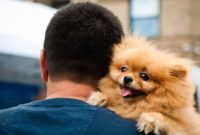 Pomeranians Like to Cuddle