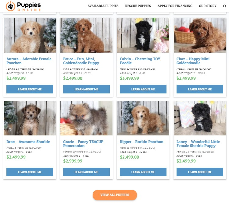 Way to buy a Pomeranian puppy on Puppy Online